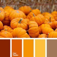 Paint Color Pumpkin by 19 Best Pumpkin Orange Paint Colors Images Colors