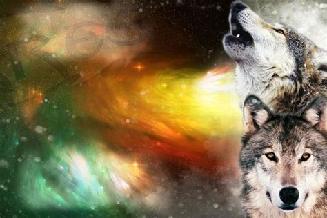 1080p Wolf Wallpaper Hd For Mobile by Wolf Wallpaper Hd 183 Free Amazing Hd
