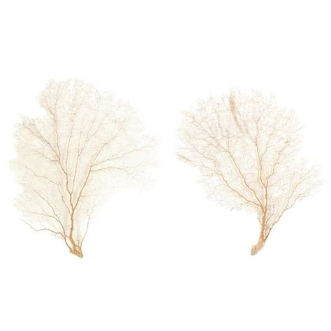 sea fans for sale large authentic pair of sea fans for sale at 1stdibs