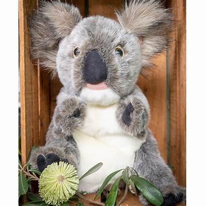 Koala Grey Animals Endangered Bandicoot Australia Southern