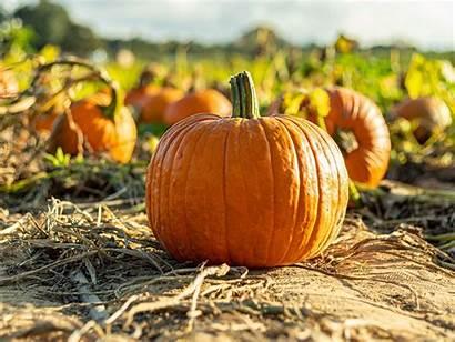 Vegetable Pumpkin Autumn Harvest Standard Wallpaperscraft