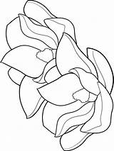 Magnolia Coloring Pages Flower Flowers Printable Colors Recommended sketch template