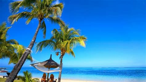 Paradise Palm Beach Hd Wallpaper Wallpaperfx