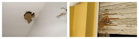 rat dans le plafond a3d le rat