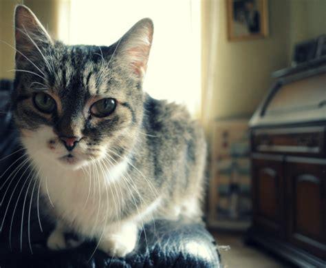 Beautiful Cat On Tumblr