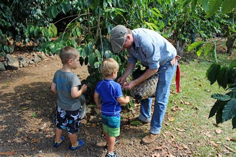 It is one of the most expensive coffees in the world. Kona Coffee Living History Farm Celebrates Spring Break   Big Island Now