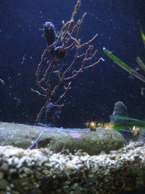 aquarium banyuls sur mer banyuls 3 visite de l aquarium de l observatoire oc 233 anologique abricocotier fr