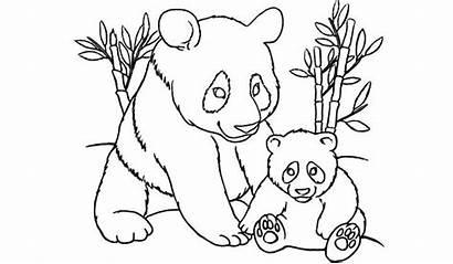 Panda Pages Coloring Printable Bear Colouring Pandas