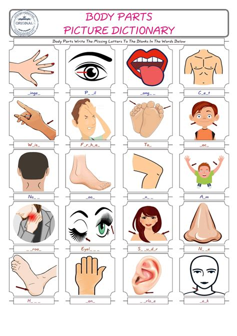 body parts esl printable english vocabulary worksheets