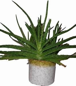 Roth West German Cactus Plant Pot 4 | Pots And Pots