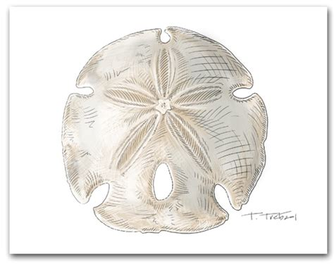 sea shells note card scallop auger sand dollar