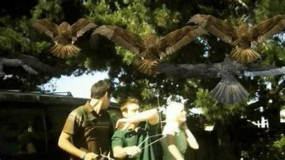 Birdemic Birds Gifs Giphy