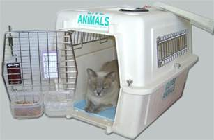cat crates acclimating your pet cat or to airline crate dryfur 174