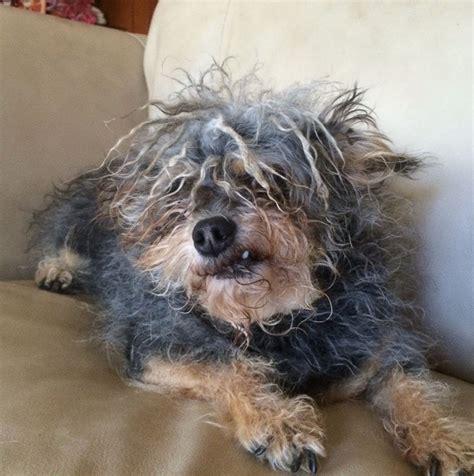 meet  worlds ugliest dog  image  abc news