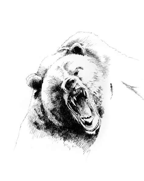 Grizzly Bear Sketches   Grizzly bear drawing, Bear drawing, Grizzly bear tattoos