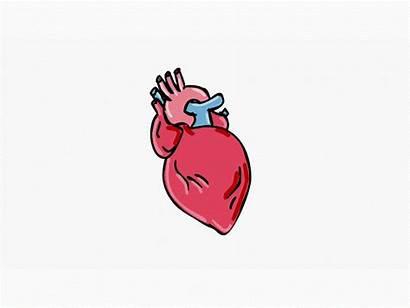 Beating Heart Cartoon Animation Human Movement Hear