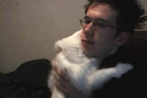 New trending GIF tagged cat hug via http… | Trending Gifs