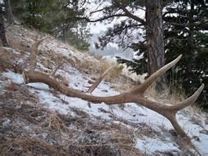big bull elk antlers for brian monstermuleys com