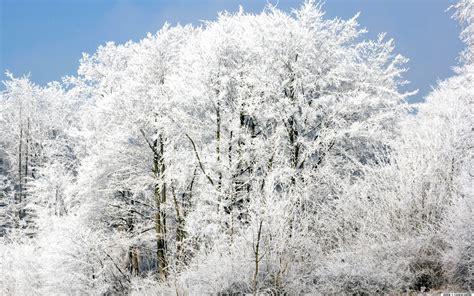 bäume als sichtschutz die 75 besten wei 223 e hintergrundbilder
