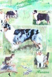 australian shepherd dog lover on pinterest australian