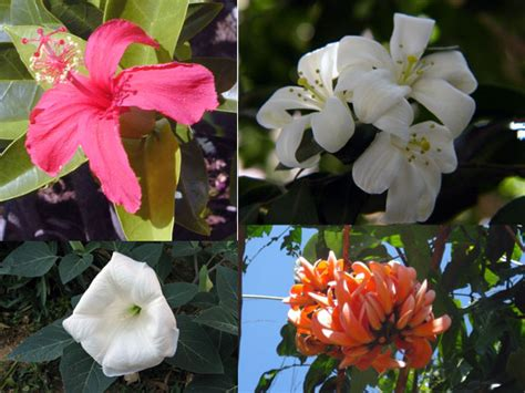 Of The Gods Flowers by Hindu Gods Their Favourite Flowers Boldsky