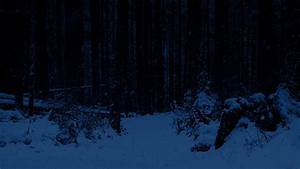 Path Through Snowy Forest At Night by RockfordMedia | VideoHive