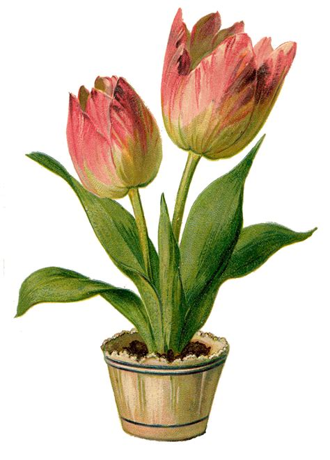 graphics clipart vintage clip pretty pink tulips the graphics
