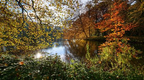 Autumn 4k Uhd Wallpapers by Wallpaper Netherlands Nature Landscape Autumn Trees