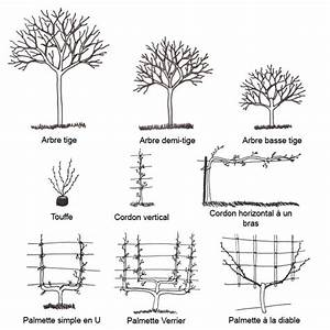 Comment Tailler Un Abricotier : la taille des arbres fruitiers ferme de sainte marthe ~ Melissatoandfro.com Idées de Décoration