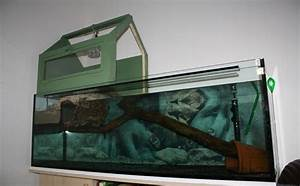aquarium höckerschildkröten