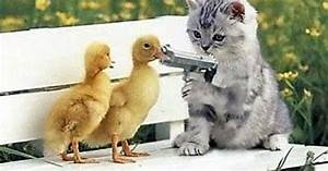Kittens With Guns | vote for kittens with guns or the ...