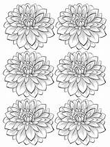 Coloring Adult Flowers Flower Dahlia Adults Colorare Fiori Adulti Disegni Six Vegetation Most Vegetazione Printable Blumen Justcolor Fleurs Flores Coloriage sketch template