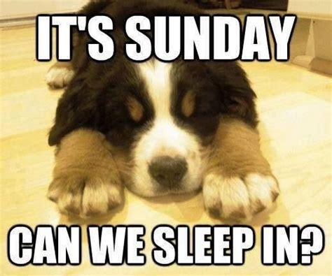 Sunday Memes - its sunday can we sleep in pictures photos and images for facebook tumblr pinterest and twitter