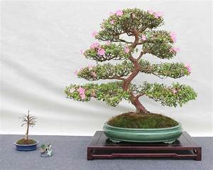 prachtvolle bonsai arten archzinenet With garten planen mit bonsai bs 01
