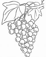 Coloring Grapes Pages sketch template