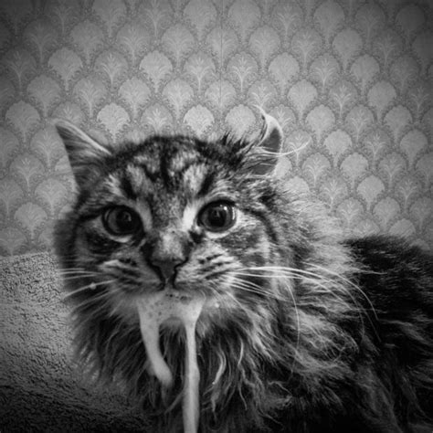 Feral Feline Photography  Cat Photography Series