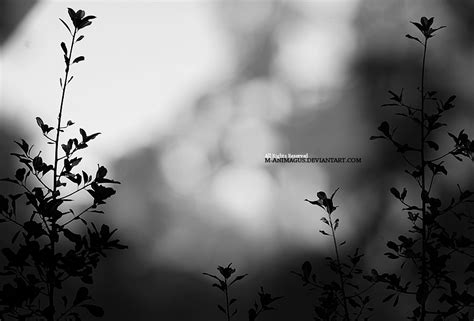 Nature In Black And White By Manimagus On Deviantart