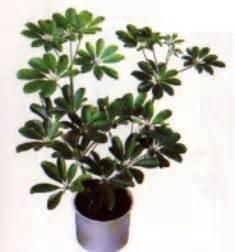 Zimmerpflanzen Direkte Sonne Vertragen zimmerpflanzen direkte sonne vertragen blumen in nanopics bilder