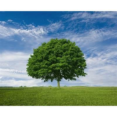 Tree HuggerThe Holistic Woman RI