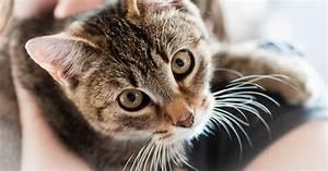 Was Brauchen Katzen : diese besonderen katzen brauchen eine besondere f rsorge ~ Lizthompson.info Haus und Dekorationen
