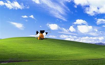Windows Funny Xp Bliss Desktop Backgrounds Wallpapers