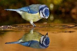 mirror water reflection birds animals nature other ...