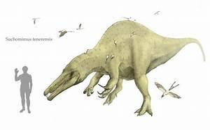 Spinosauridae JungleKeyfr Image 300