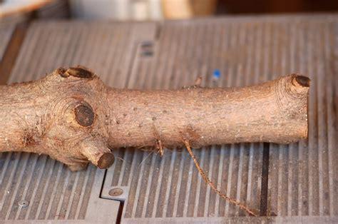woodworking tips  ideas  dremel tools
