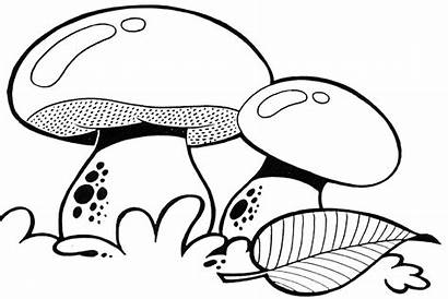 Coloring Jamur Mewarnai Mushroom Gambar Mewarna Mushrooms