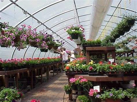trees you can plant to house house plants green acres