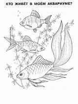 Aquarium Ausmalbilder Fische Malvorlagen Kostenlos Zum Ausdrucken Fish sketch template
