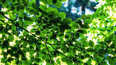 artificial leaf   day     fuel