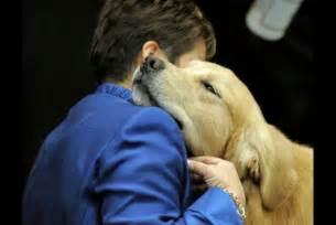 Golden Retriever Comfort Dogs
