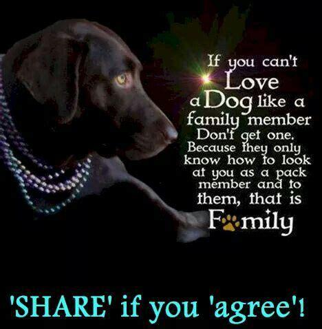 understood   dog  tying
